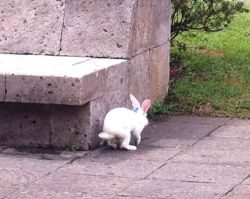 A white rabbit taking his leave