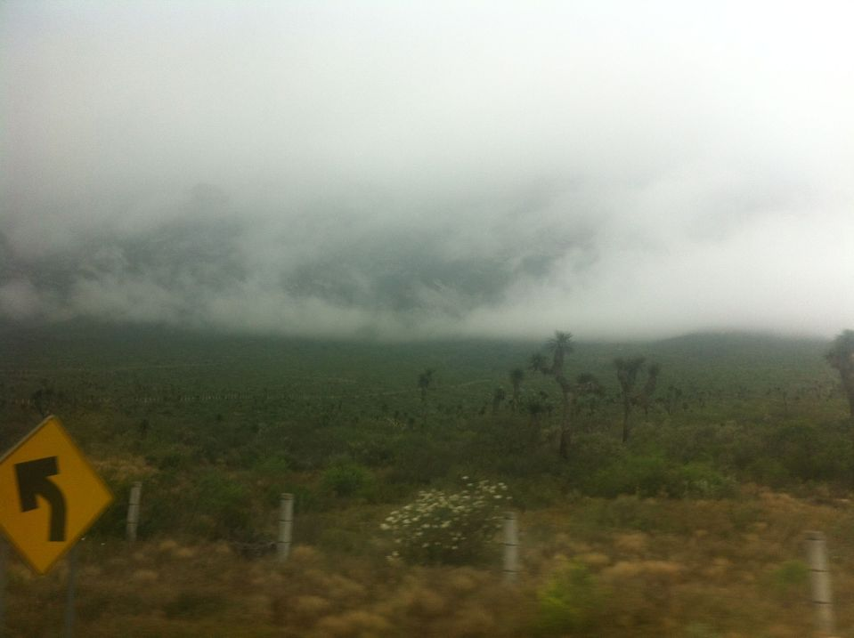 Another blurry picture taken from a bus and featuring mist and cactus, taken on the road from Saltillo to Monterrey.