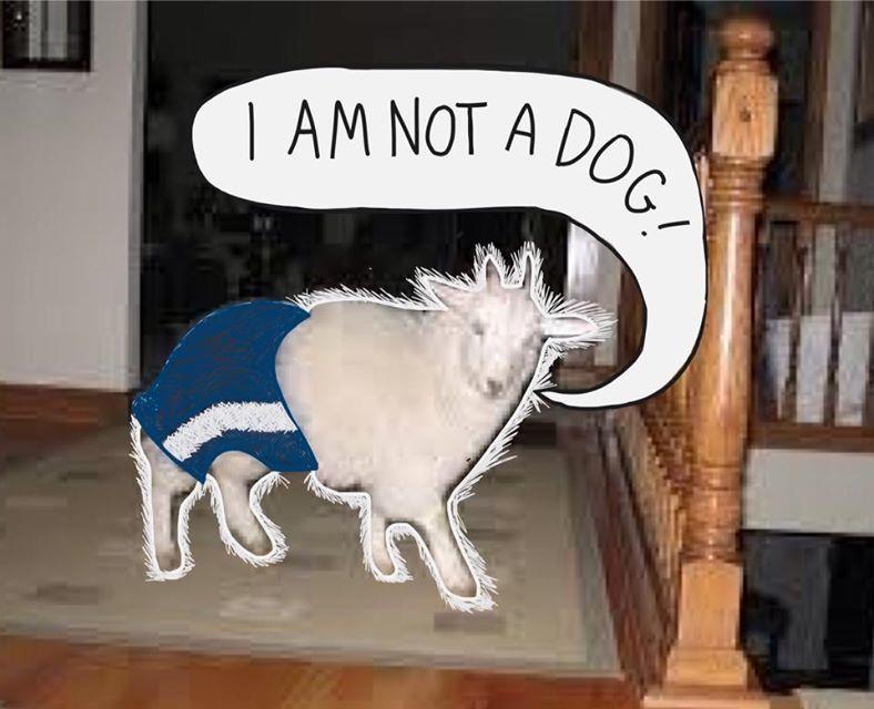 goat dog