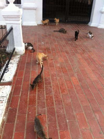 Mompox cementery cats