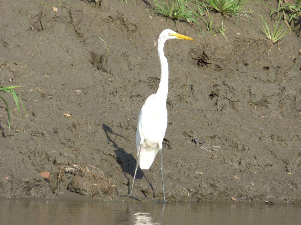 Solitary stork