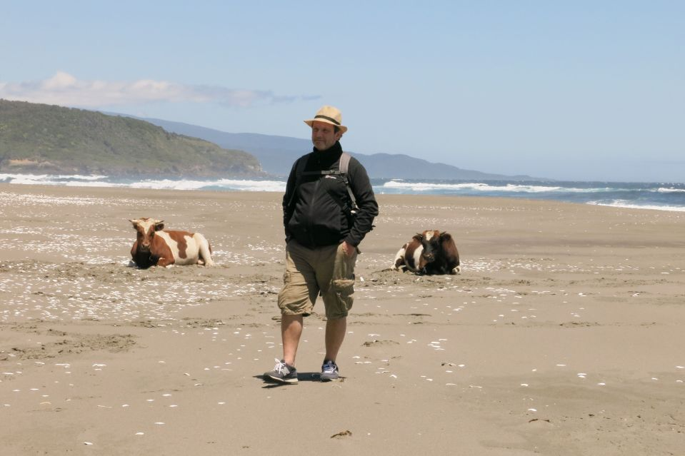 Blanco with bored cattle on beach