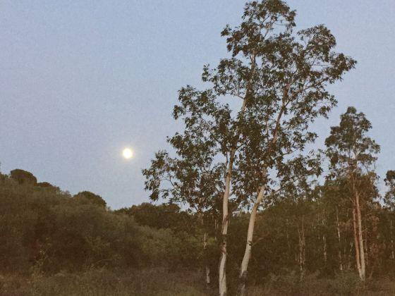 moon rabos 28 August 2015