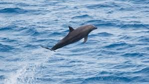 A porpoise with purpose