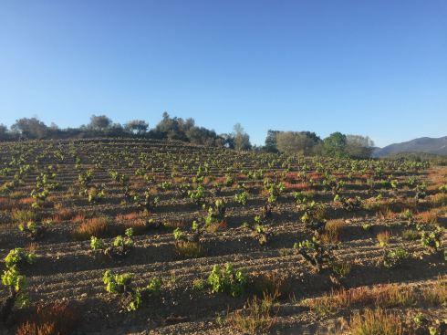 vineyard april