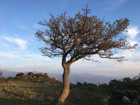 tree in alberas