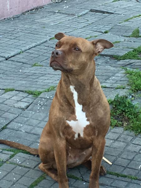 Jose dog