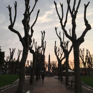 san jose trees 2