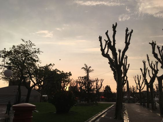 san jose trees