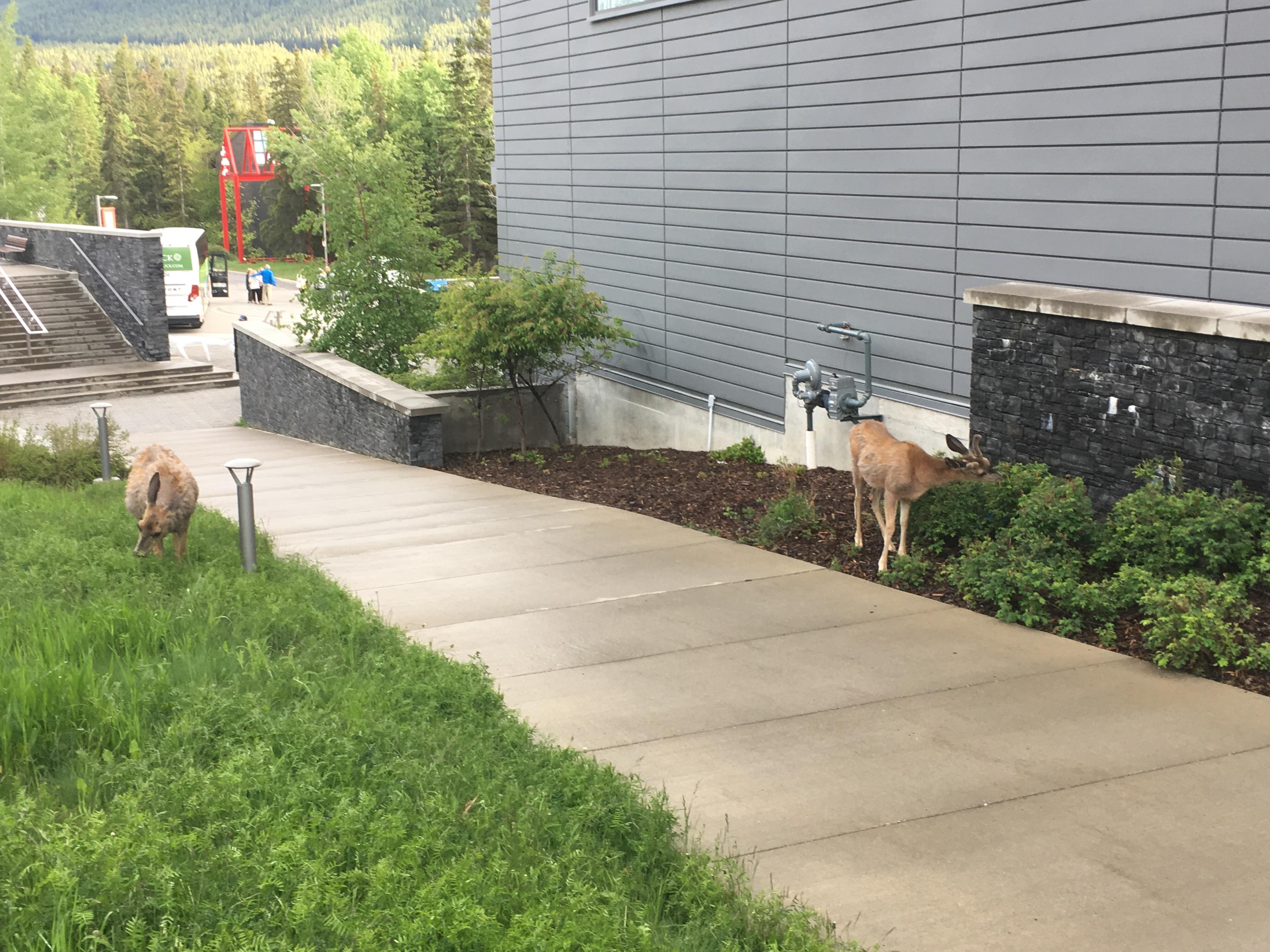 A dichotomy of deer.